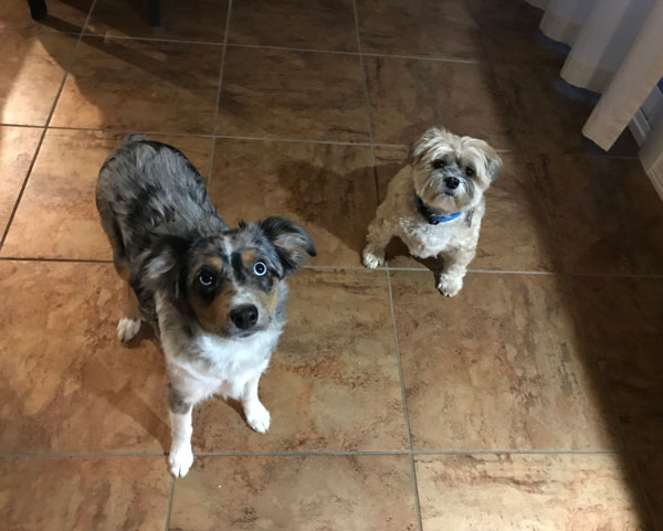 Two small dogs on a tile floor