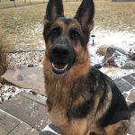 Dog Manners Training 6