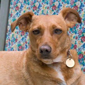Jingle tag on a dog's collar