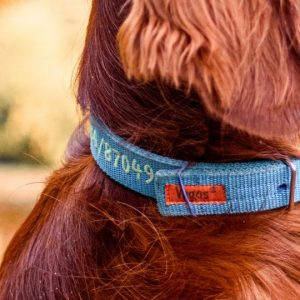 Blue dog collar with an embroidered phone number