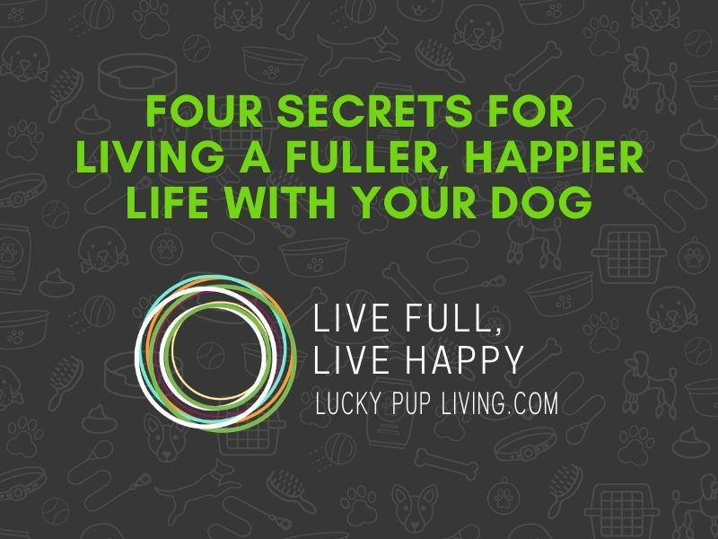 Secrets for Full, Happy Life with your Dog 5